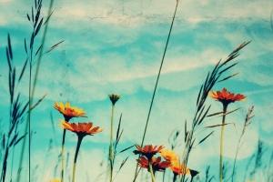 PaperMeadows-Orangeandbluemeadow-12x18